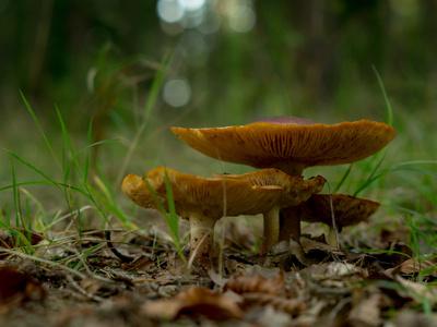 Bildquelle: Stefan Heerdegen / pixelio.de